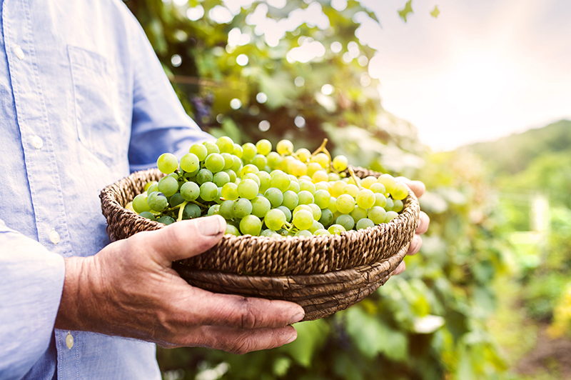 Grapes: Good for the Brain