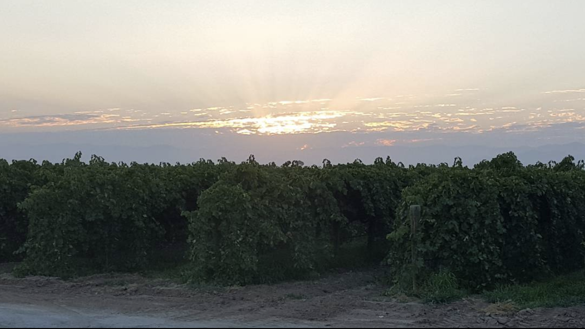 Behind the Scenes at Jasmine Vineyards