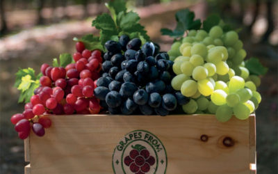 Grape Merchandising and Display Tips for Grocers